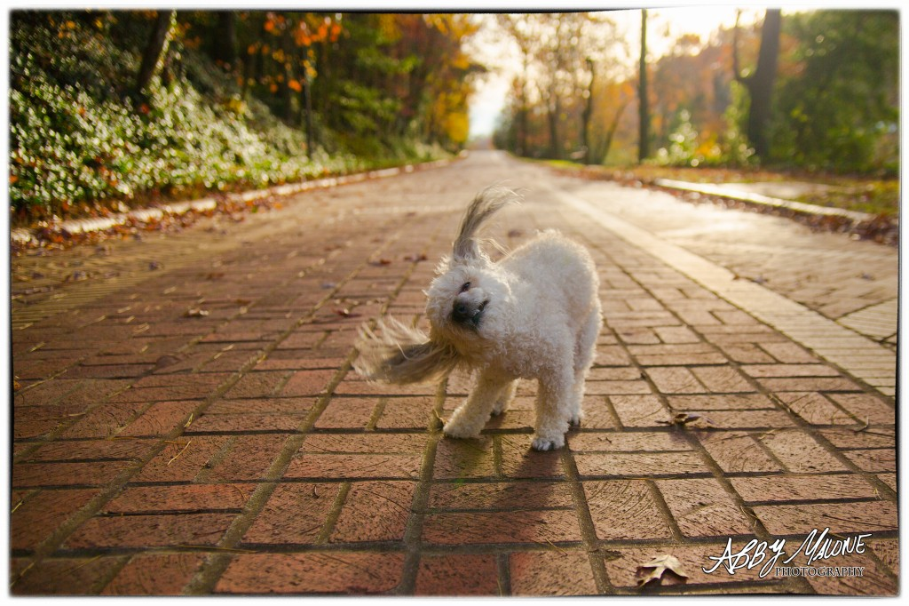 Pet Photographer Little Rock, Hot Springs, Arkansas