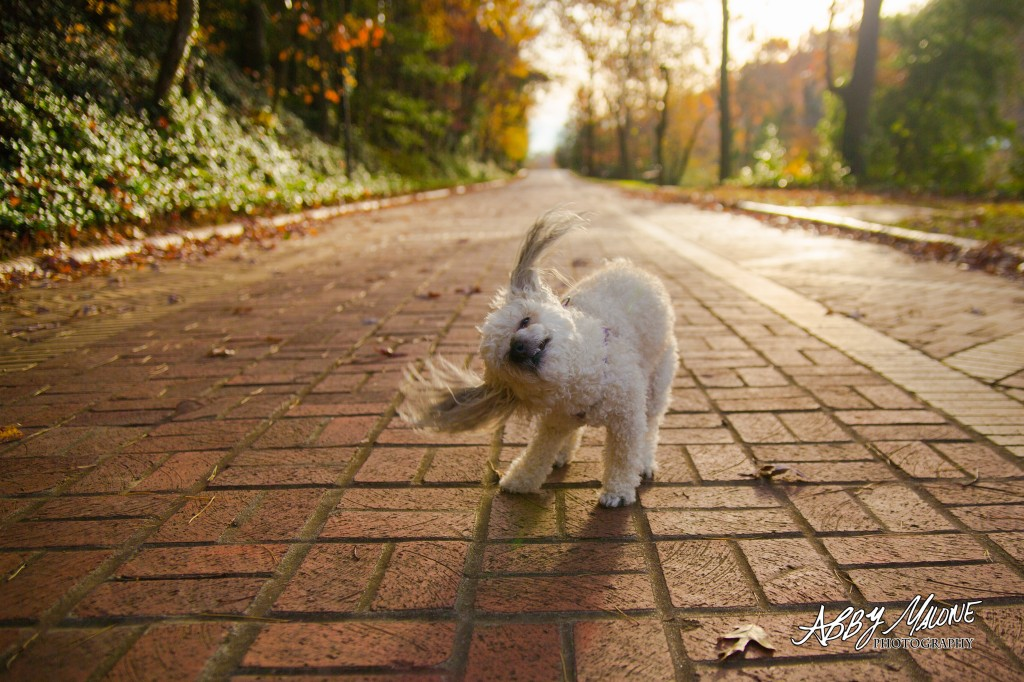 Pet Photography in Central Arkansas