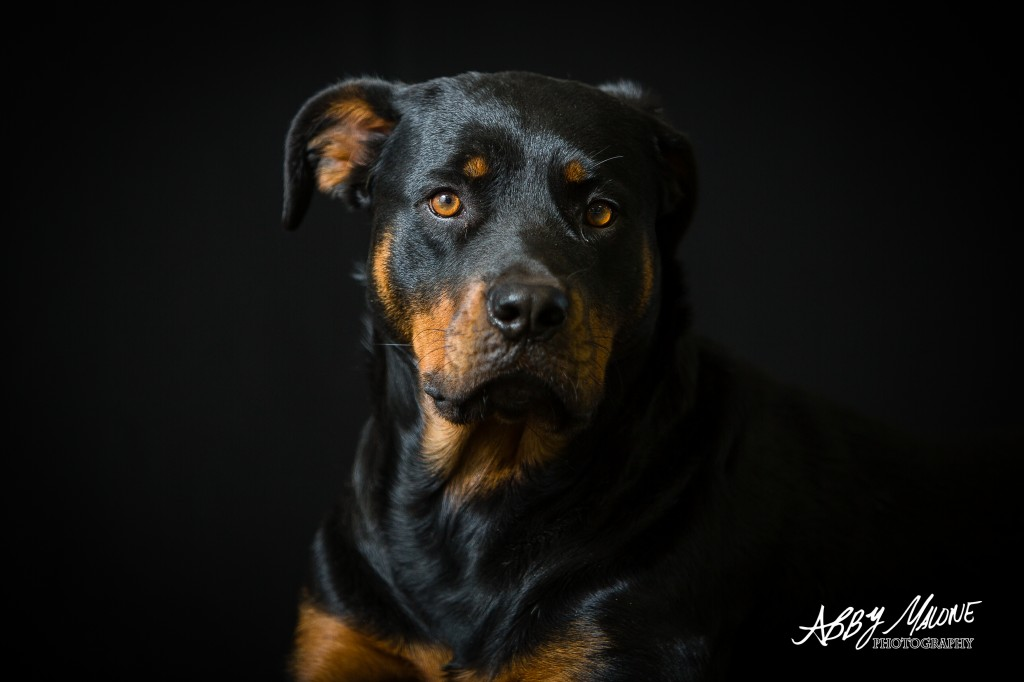 Pet Portraiture in Central Arkansas