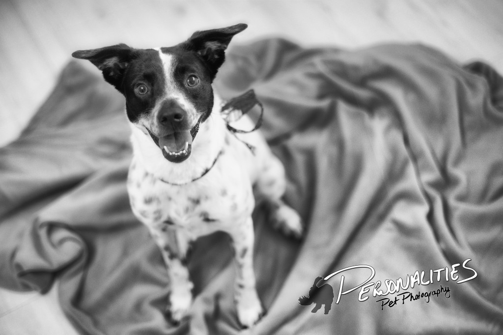 Dog Photography in Benton, AR