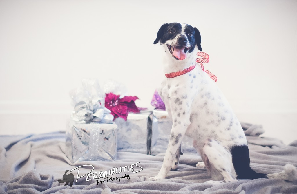 Dog Photographer in Hot Springs, AR
