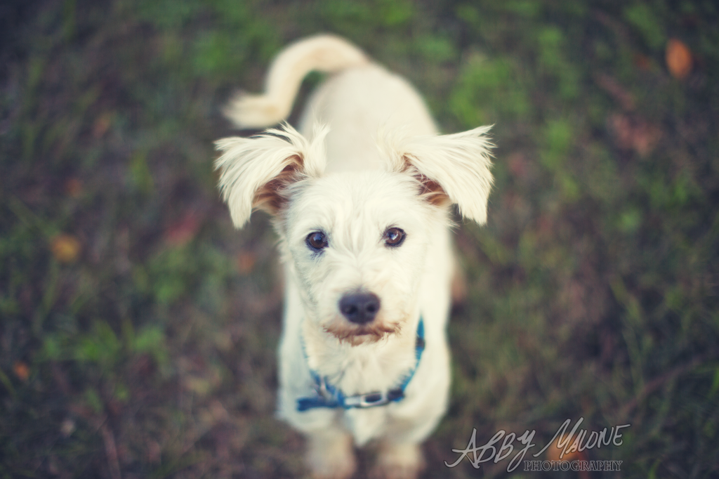 Arkansas Pet Photographers