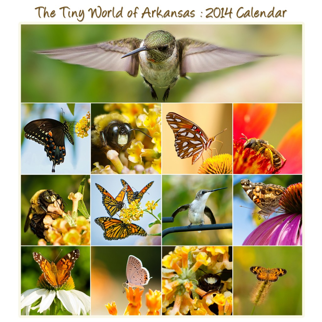Arkansas Tiny World Calendar Promo