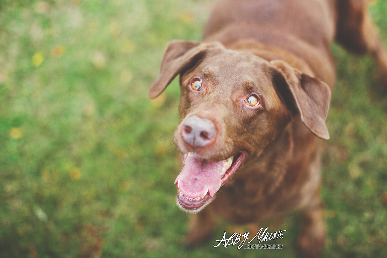 Pet Photography Arkansas